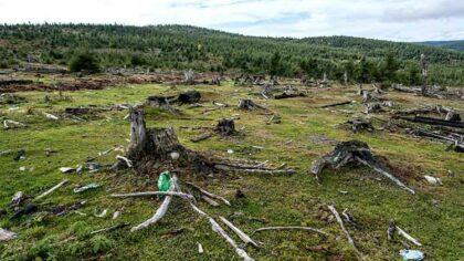 Declinul habitatelor si al speciilor...