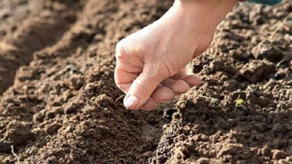 Ce sa semeni la inceputul...