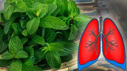 Aceste 9 plante curata plamanii...